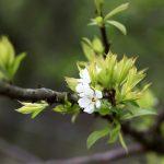 Mùa xuân xôn xao